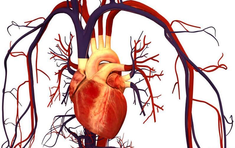 哈尔滨能治心脏绞痛的医院