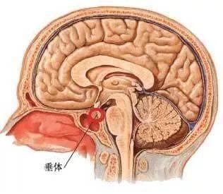 哈尔滨治疗脑垂体瘤哪好